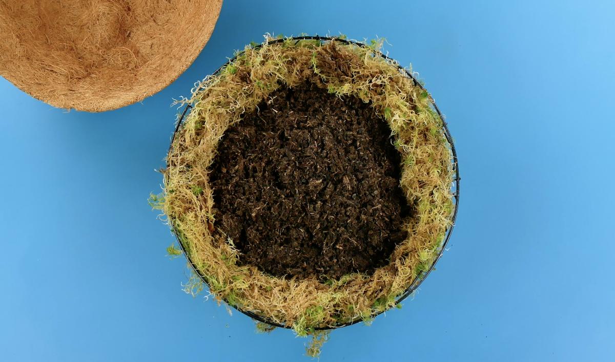 suporte de planta com musgo e terra