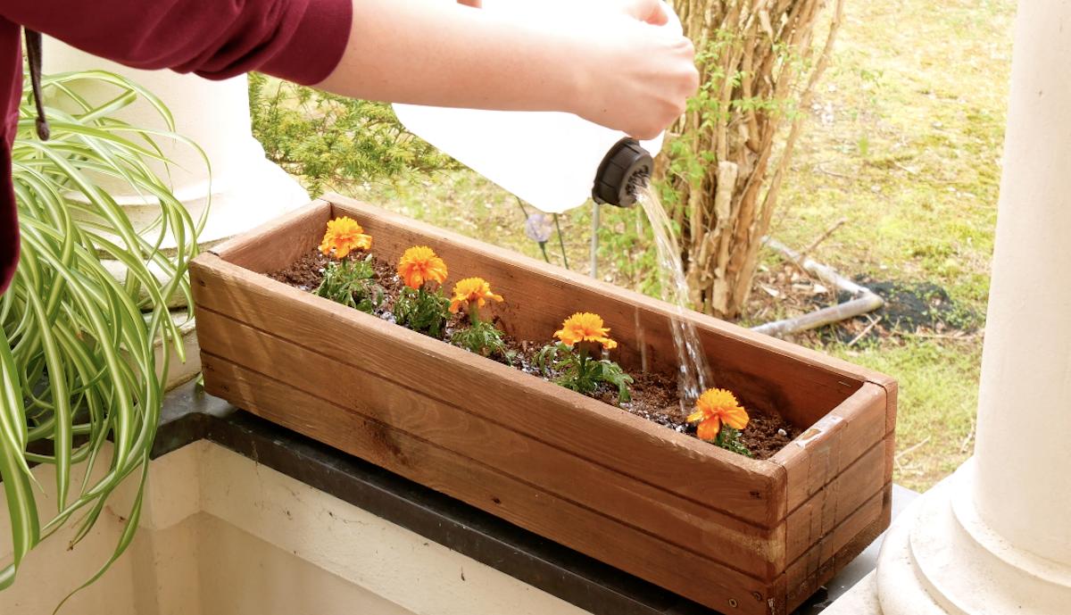 regar plantas com galão regador caseiro